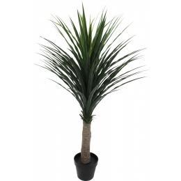 Cordyline Australis Plant In Pot 120cm Green