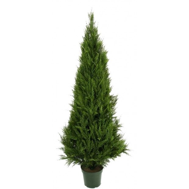 Artificial UV Resistant Cypress Pine Tree 1.8m